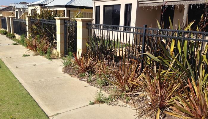 Butler-Job---Garden-Clean-up-1Before